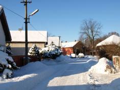 Sukorady v zimě